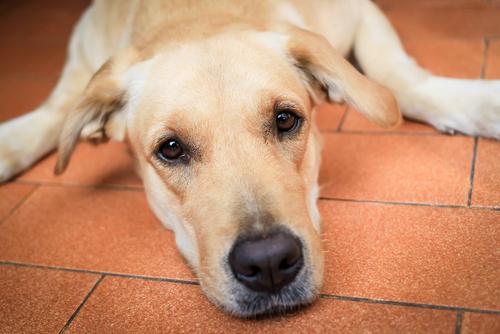 Los cuidados en la vejez del perro
