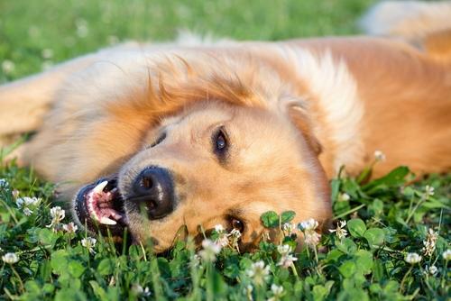 Como prevenir picadas em seu cão