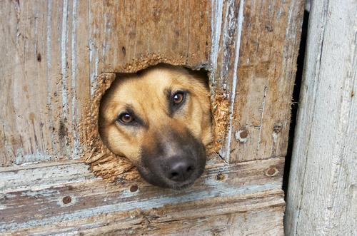 Dica para evitar que seu cão arranhe a porta