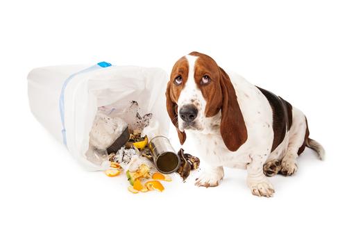 perro rebusca basura 2