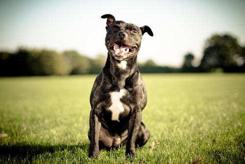 perro sonrie