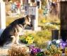 perro tumba