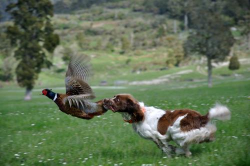perro y ave