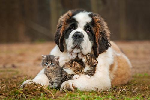 """¿Tiene sentido el dicho """"llevarse como el perro y el gato""""?"""
