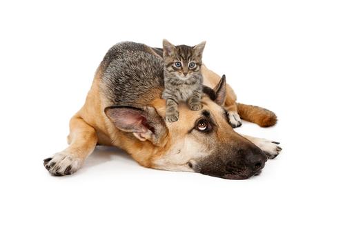 perro y gato 3