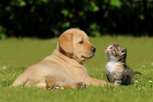 ¿Cuidas bien a tu mascota?