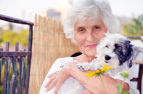 perro y persona mayor