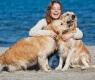 perros amo