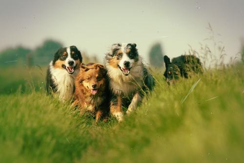Las mejores razas de perros para practicar running