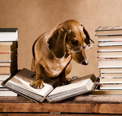 Los perros en la literatura