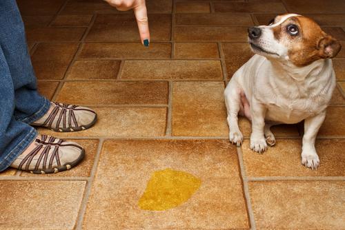 Pipí de perro