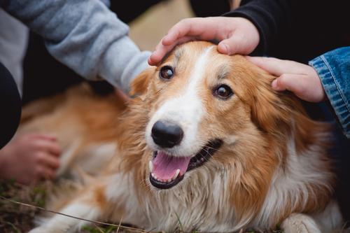 Carícia em cachorro