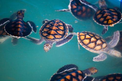 Los plásticos en los océanos matan 1,5 millones de animales al año