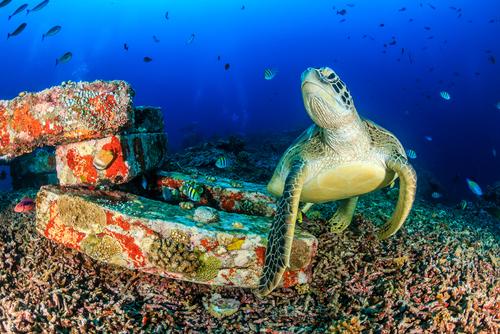 La tortuga como símbolo cultural