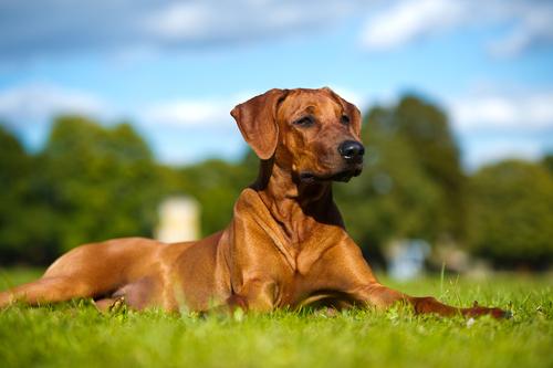 Suplementos para ayudar a tu perro con el dolor de la artritis