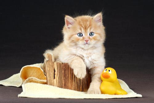 baño gato