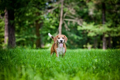 5 cosas muy simples que hacen a tu perro muy feliz