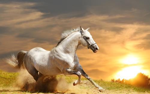 Los orígenes de los caballos ¿Quieres conocerlos?