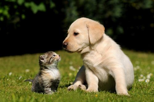 cachorro perro y gato