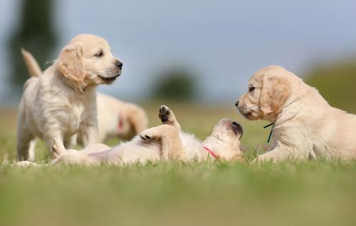 ¿Sabes qué beneficios aporta convivir con un perro?