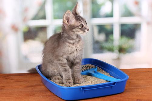 caja arena gato