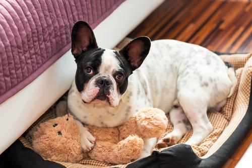 ¿Cómo hacer una cama para perros fácil y rápido?