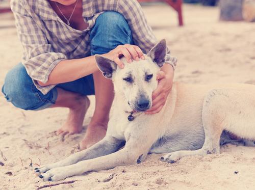 Como acariciar cachorros