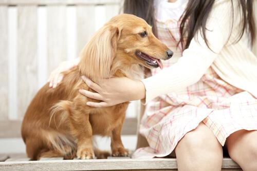 6 cosas que debes saber antes de acariciar a tu perro