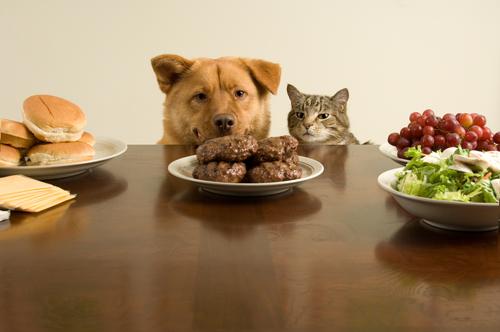 Cão e gato observando comida