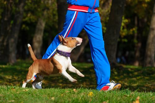 Cachorro fazendo exercício com dono