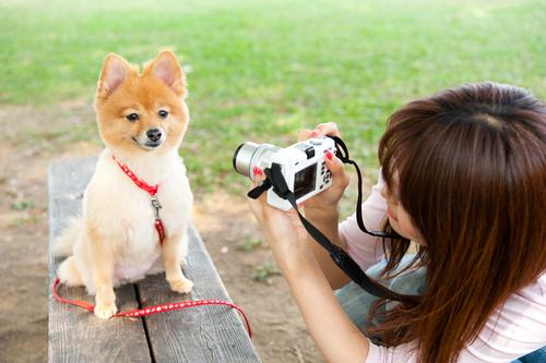 foto perro 2