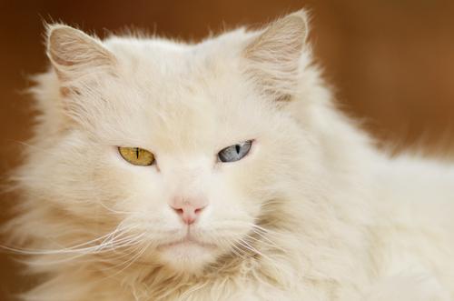 gato albino 2