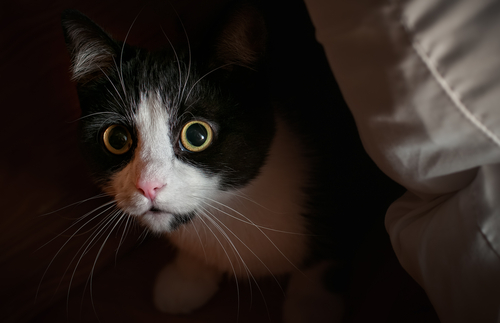 Comportamientos y conflictos en los gatos: miedo, fobia y ansiedad