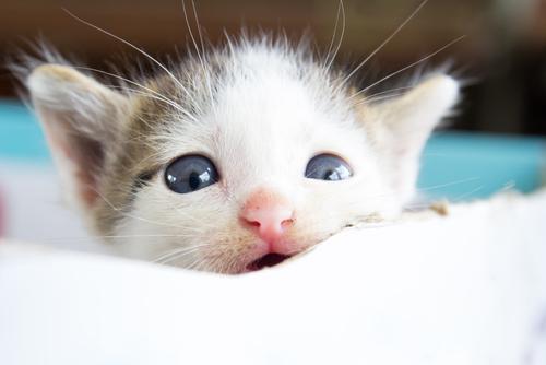 ¿Es verdad que los animales lloran?