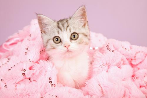 gato rosa