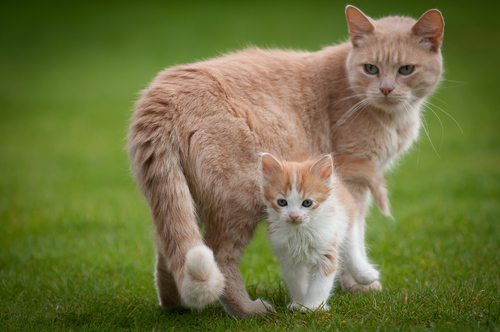 gato y cachorro
