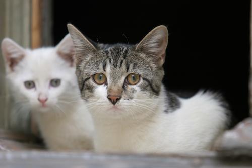 gato con heces blandas y pérdida de peso