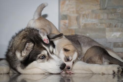 mama con cachorro