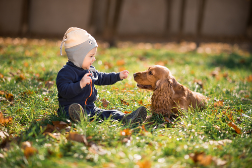 Mascotas: las mejores niñeras