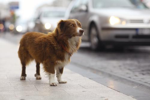 Proyecto fotográfico pretende concienciar sobre la gran cantidad de perros abandonados