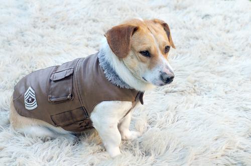 ¿Por qué es importante abrigar a los perros cuando hace frío?