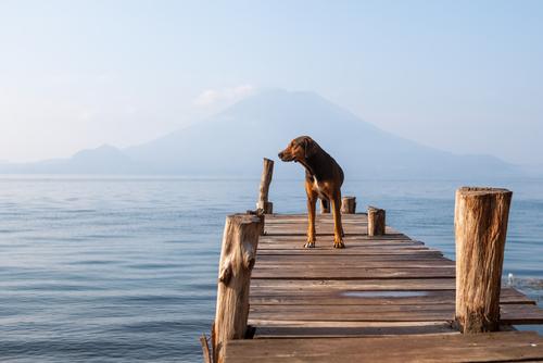perro en el lago