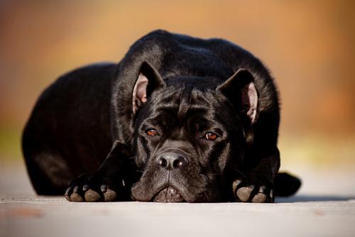 ¿Qué pasa con algunos perros cuando sus dueños fallecen?