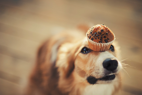 Receta para perros: bombones helados de yogur y mantequilla de cacahuete