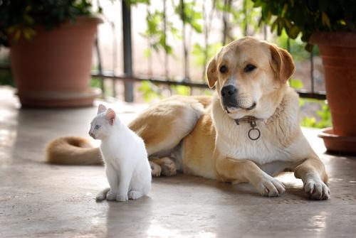 La sordera de perros y gatos... ¿Qué podemos hacer?