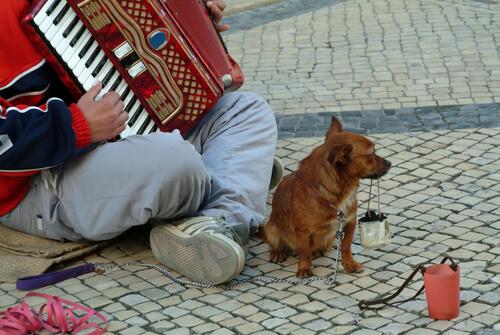 perro y mendigo 2