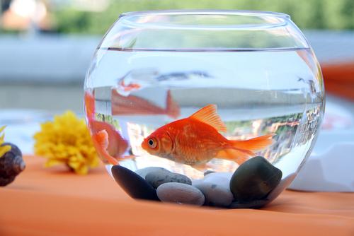 Los peces también sufren de estrés
