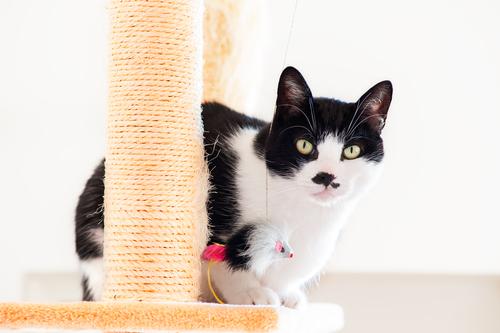Cat sitting on a scratcher