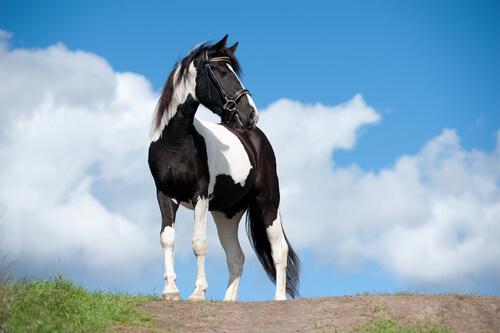Problemas dos cavalos
