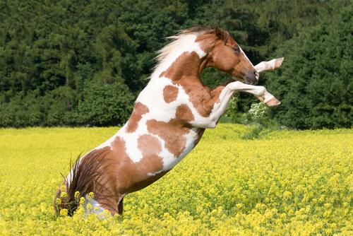 Problemas más comunes de comportamiento en el caballo
